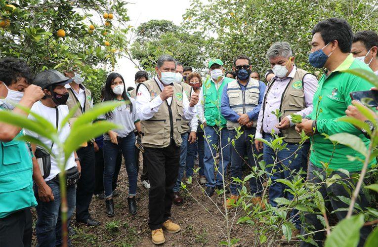 Lanzan proyecto de té verde en Leoncio Prado