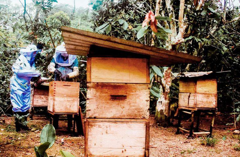 Mejoran producción de miel de abeja