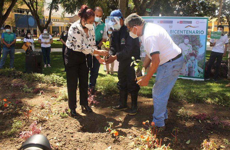 Plantan 4 árboles  de quina en  la Plaza de Armas